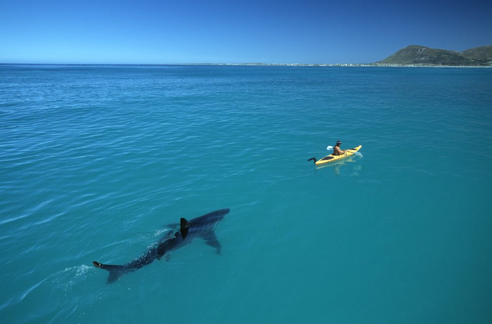 Ocean survival guide sharks