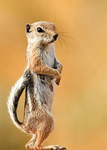 squirrel-fighting-style-martial-arts-inventions