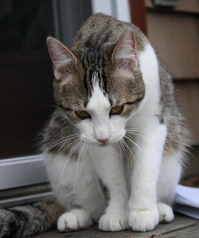 Depressed cat