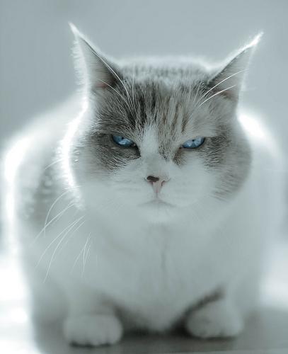 Silent cat protest