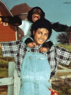 Who killed Michael Jackson: Bubbles the Chimp?